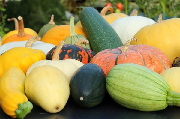 Вырастили отменный урожай тыквенных? Используйте его для укрепления здоровья!