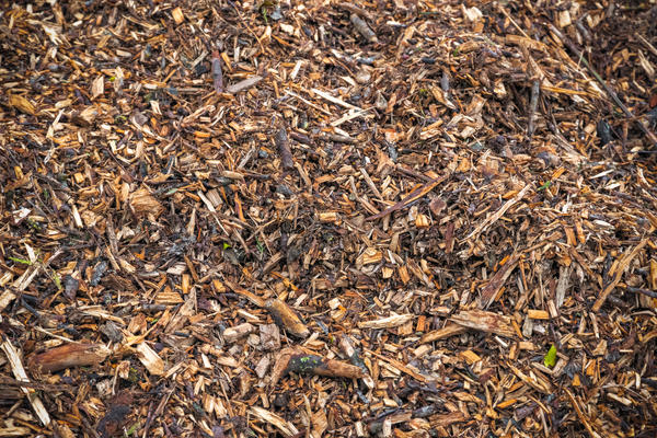 Веточная щепа - супермульча и рыхлитель для почвы