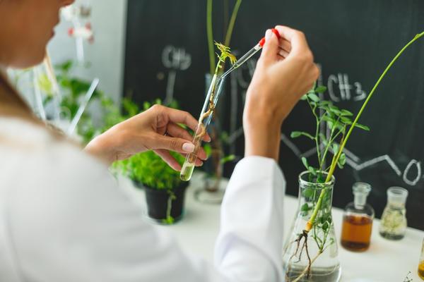 Природа действия гуматов на растения учёными до сих пор не разгадана полностью