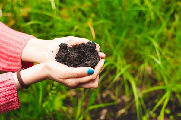 Вопрос плодородия почвы и питания растений - один из самых важных для любого садовода-огородника