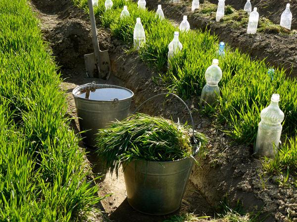 Каков самый лучший и естественный почвоулучшатель?