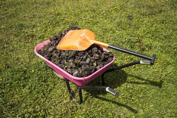 Весной можно вносить навоз как подложку для растительной мульчи