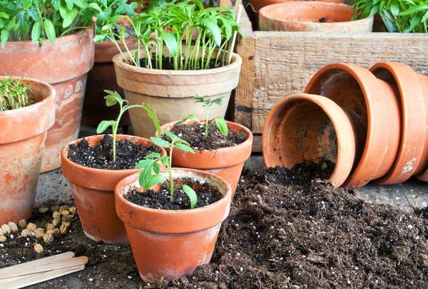А как вы готовите почву для рассады?