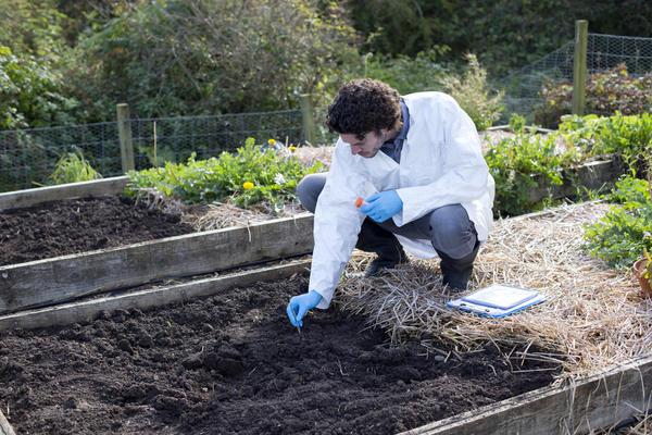 Дачник поневоле становится специалистом в выращивании растений