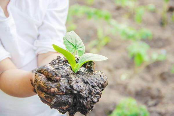 С высадкой рассады на постоянное место (а значит, и с посевом на рассаду) спешить не стоит!