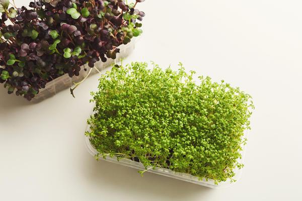Кресс-салат - рекордсмен по скорости отдачи урожая
