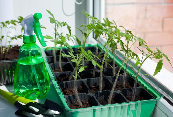 Есть общие факторы, влияющие на развитие растений