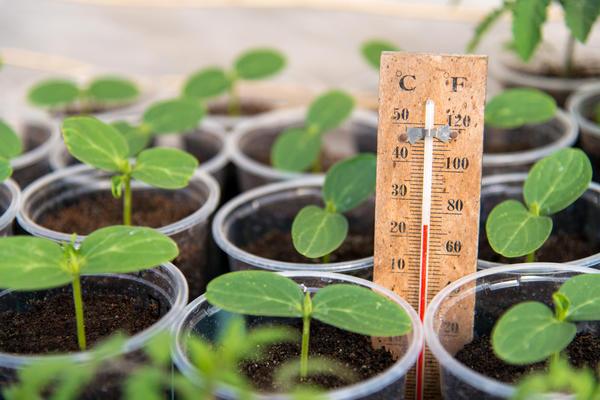 Для каждой культуры рекомендована определённая температура выращивания