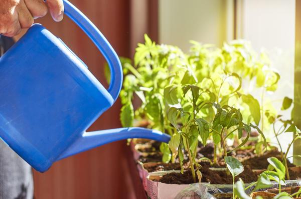 Иногда из лучших побуждений садовод покрепче разведёт удобрение, да почаще польёт им