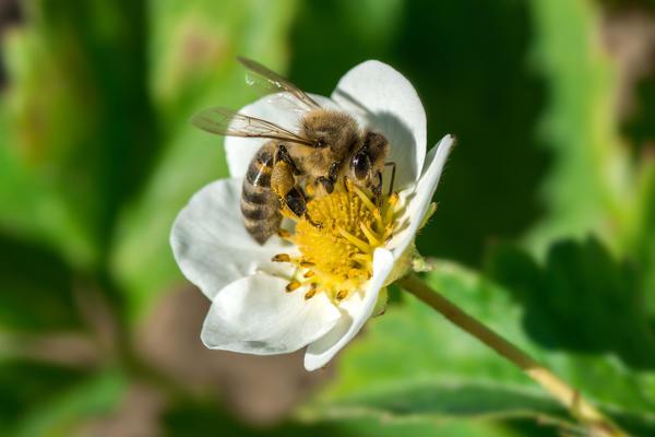 Дома вам придется поработать пчелами