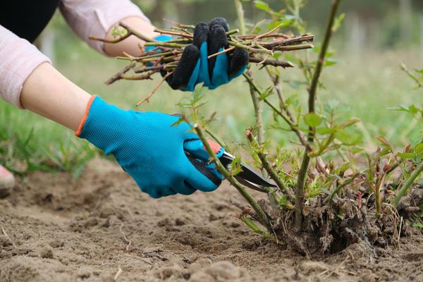 В начале весны нужно пройтись по саду с секатором. Если все сделать правильно, растения станут крепче и будут цвести обильнее