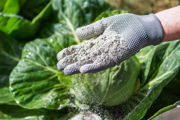О том, что печная зола - полезная для растений добавка в питании, наверняка знает большинство огородников