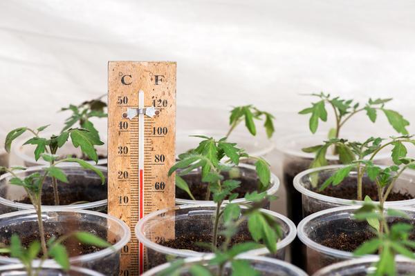 В неотапливаемых теплицах растения нужно защищать от заморозка
