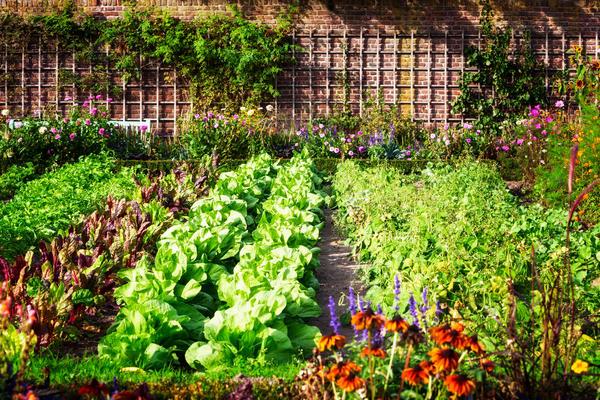 Сегодня в цветнике можно встретить огородные растения, а среди грядок — цветущие летники