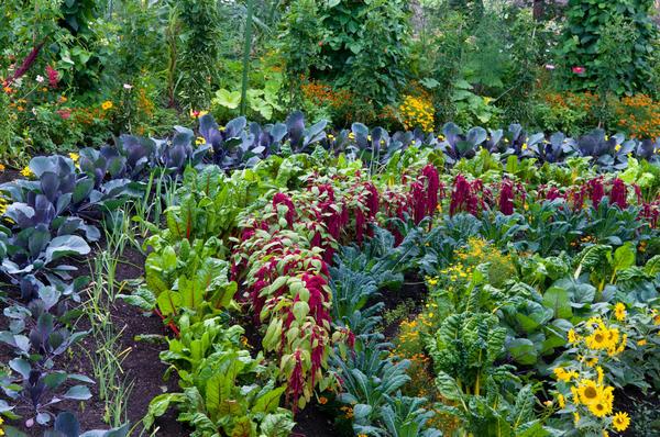 Какой огород можно назвать красивым, каждый понимает по-своему
