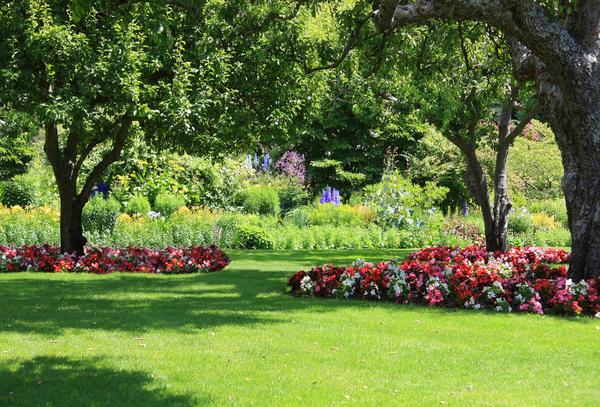 Как лучше оформить приствольные круги деревьев в саду?