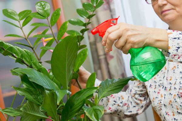 Как избавиться от тли на комнатных растениях?