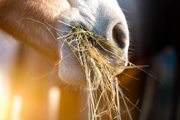 Сено — основной корм сельскохозяйственных животных в зимний период