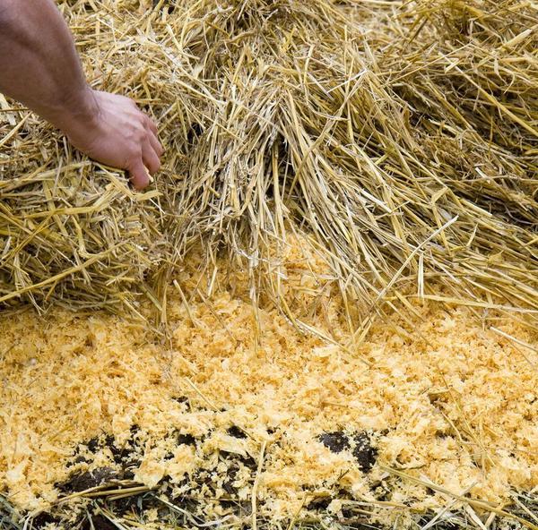 Солому можно использовать для приготовления компоста