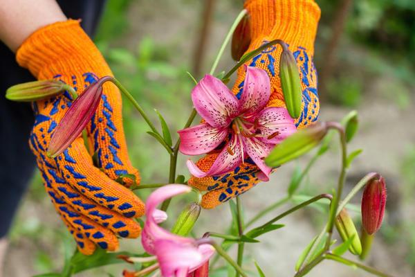 Уход нужен лилиям не только во время цветения, но и после него