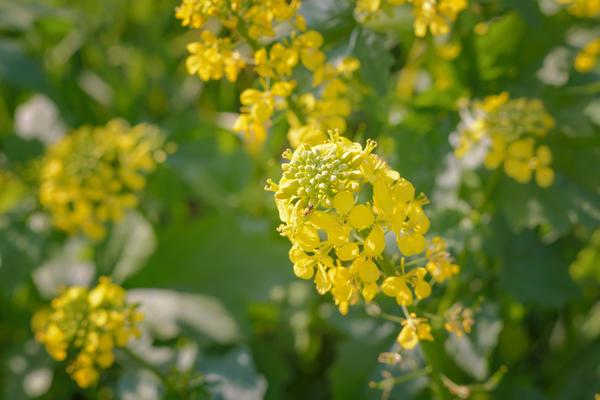 Сидераты осенью: что посеять для улучшения почвы на участке