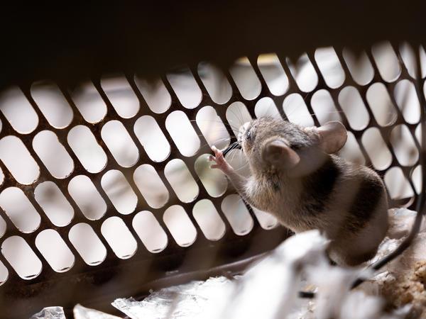 Если у сетки будут большие ячейки, мыши без труда проникнут в дом