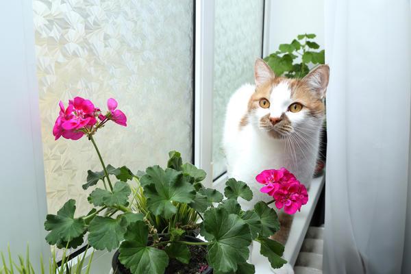 Красивые комнатные цветы можно вырастить из семян