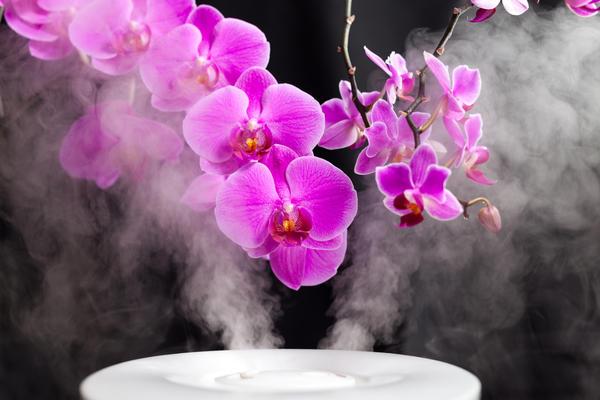 Не только орхидеям важен правильный микроклимат