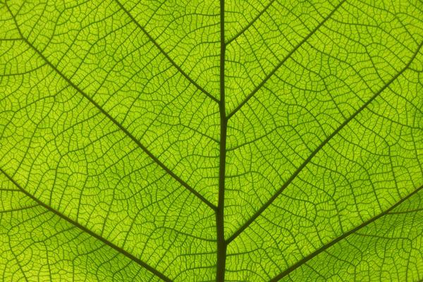 Янтарная кислота необходима для образования хлорофилла