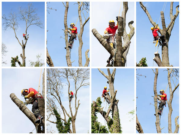 Можно ли пилить деревья на участке и как не заработать за это штраф