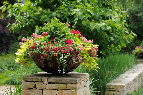 Как выбрать выносливые и красивые ампельные растения?