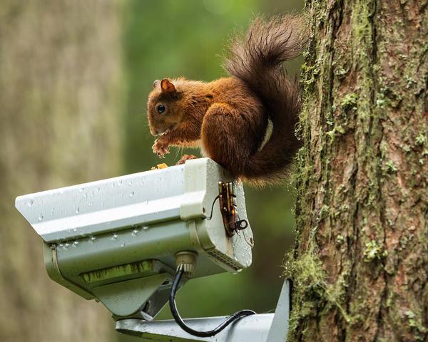 За дикими животными можно наблюдать и онлайн
