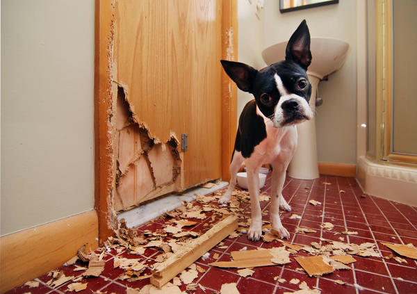 Если в доме есть животные, материалы для ремонта нужно выбирать особенно крепкие