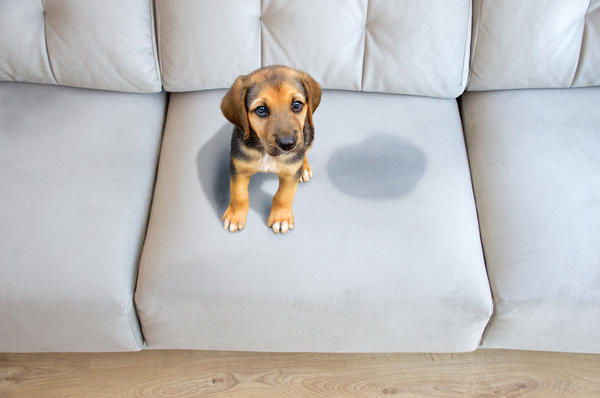 Лучшим вариантом будет мебель, обитая флоком или куртизаном