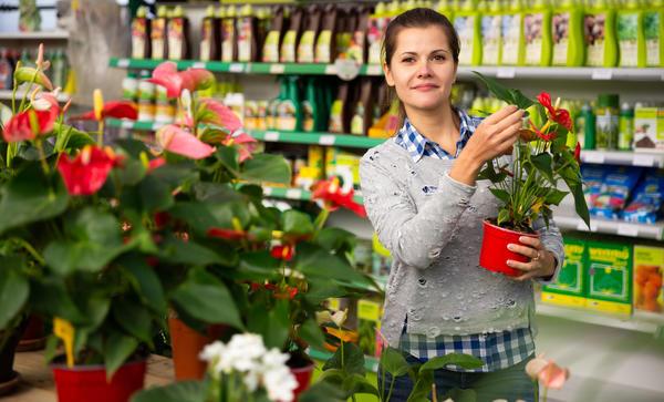 Зимой очень хочется побаловать себя покупкой нового зеленого питомца. Как довезти и сохранить ослабленное растение?
