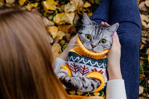 Только вам, по секрету: свитер не из бутика, хозяйка сшила!