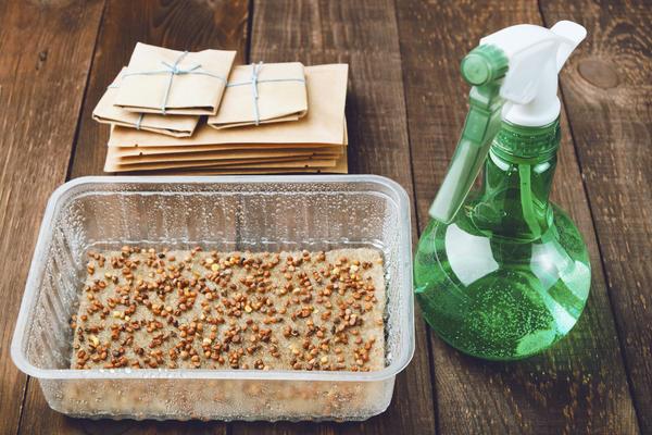 Как подготовить семена к посеву?