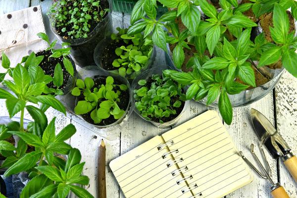 Садовый дневник: как удобнее его вести?