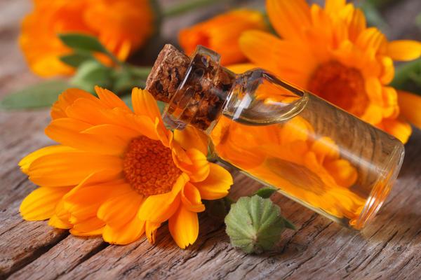 Цветки календулы можно использовать для приготовления косметического масла
