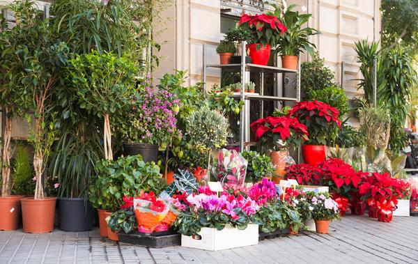 Для того чтобы избежать проблем с комнатными растениями, важно грамотно их выбирать
