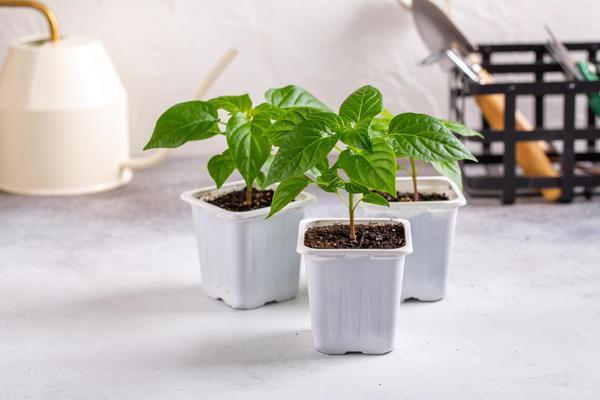 Чего хотят растения на самом деле?
