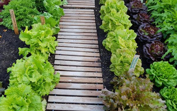 Экспресс-вариант садовых дорожек