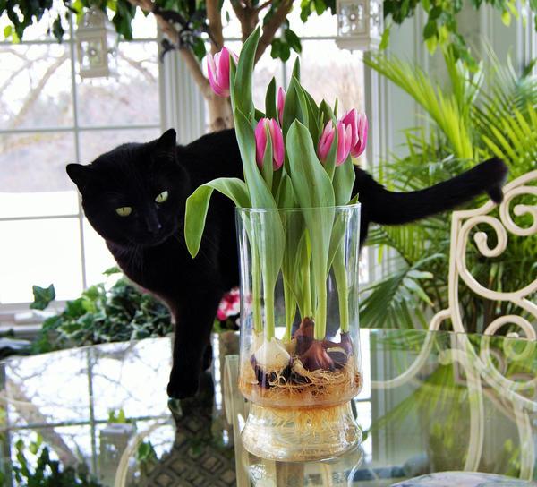 Цветы увянут, а луковицы останутся. Что с ними делать?