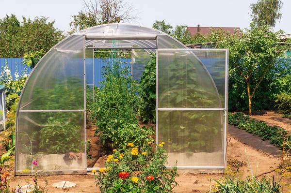 Дачники высаживают в одну теплицу самые разные овощные культуры