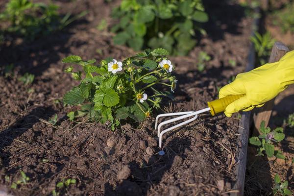 Как сделать почву рыхлой?