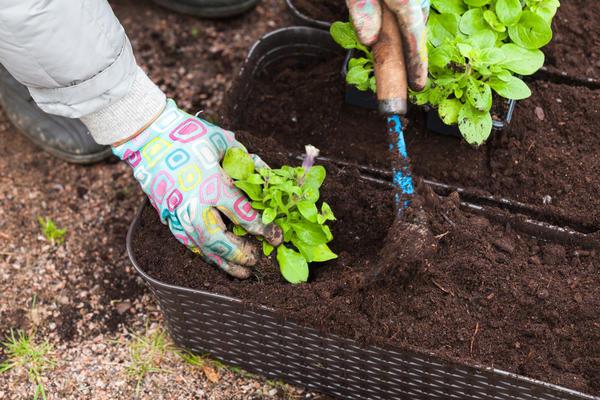 Петунии нужна почва с рН от 6 до 7,5