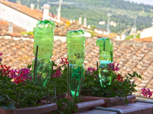 Капельный полив с помощью пластиковых бутылок - это удобно!