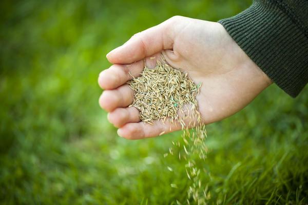 Хороший газон начинается с правильных семян