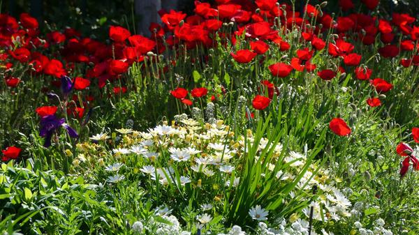 Растения со сходными сроками цветения лучше объединять в группы