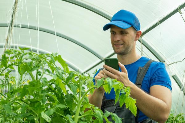 Управлять умной теплицей можно с помощью обычного смартфона